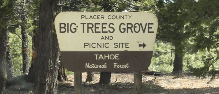 Placer Big Trees